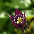 写真: 201104flower 840