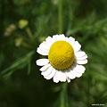 写真: 201104flower 873