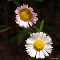 写真: 201104flower 880