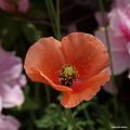 写真: 201104flower 883