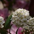 写真: 201104flower 886