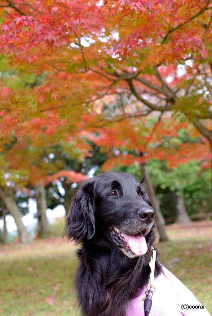 写真: 紅葉とスウィート