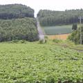 写真: 就実の丘