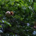 Photos: 090710_E-410+50mmf2_018
