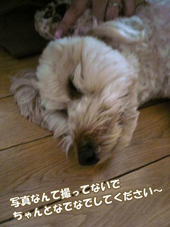 100512 くーかい of the day -2