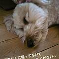 写真: 100512 くーかい of the day -2