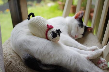 マカロンと俵猫