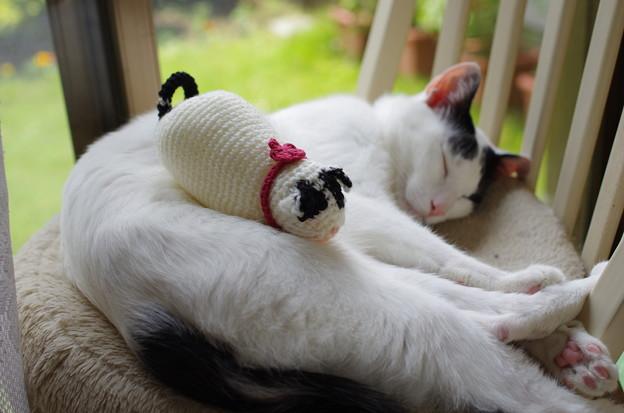 写真: マカロンと俵猫