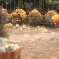 写真: ソフトフォーカスな庭