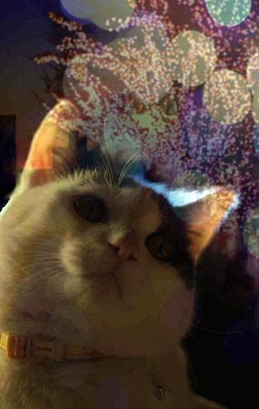 夜景を見る猫