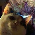 写真: 夜景を見る猫