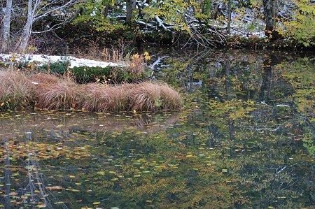 2010.10.28 蔦温泉 蔦沼 沼面の落葉