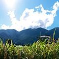 Photos: 2011.09.18 長野県 駒ヶ根市 田圃 垂れる季節