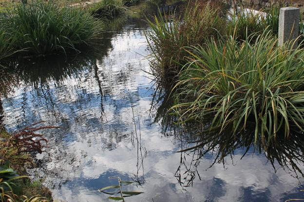 写真: 菖蒲池