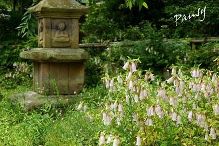 ホタルブクロの咲く庭・・風待月の東慶寺・・20