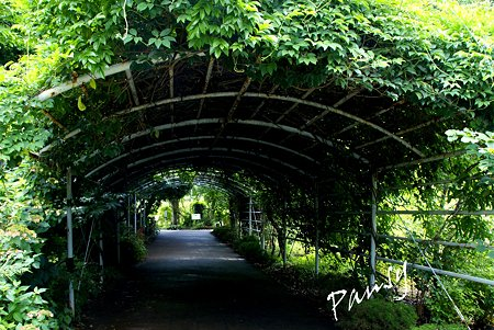 緑のトンネル・・