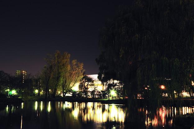 夜の池に明かりを灯すKitara
