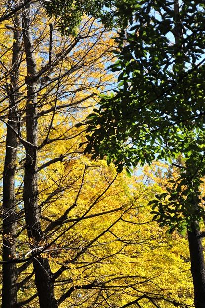 写真: 秋だねぇ