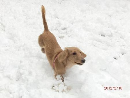 雪遊びも出来るなんて最高!
