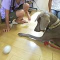 Photos: 上手にボールで遊びます