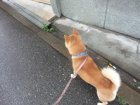 歩くぞ、歩くぞ!