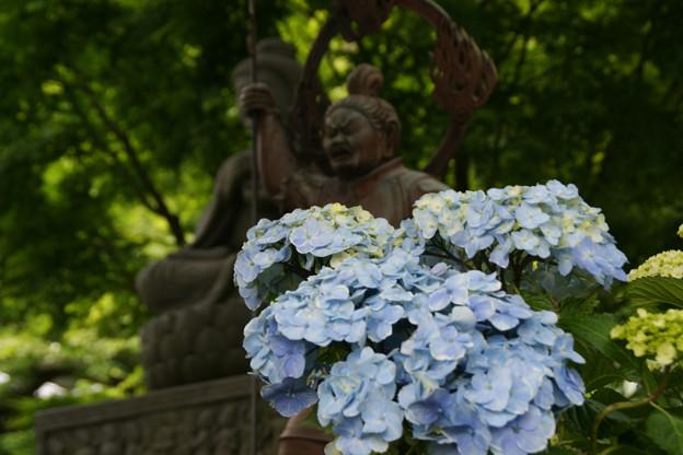 Photos: 紫陽花と四天王!(100605)