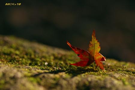 秋を待つ・・・