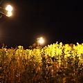 Photos: 黄色の世界1