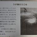 Photos: 110513-72うず潮のうごき