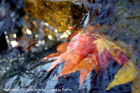水の中にも秋が!