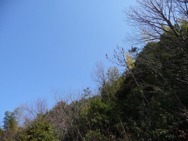 2011/02/27 森のいちご (香川県三木町)