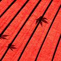 Photos: 紅色の秋