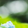 透き通る青