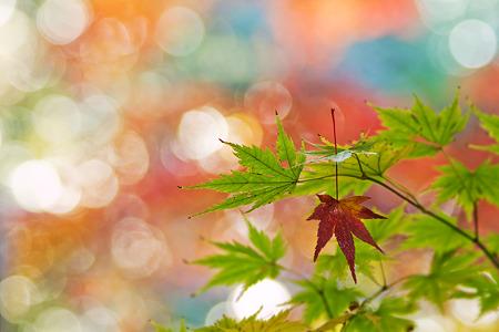 秋色輝く朝