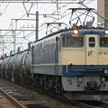 写真: pf1041-20080321