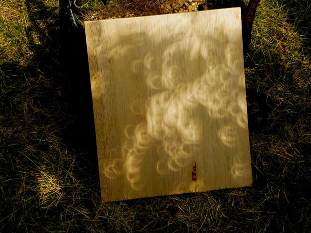 Photos: 20120521 金環日食 (05) 木漏れ日もリングに