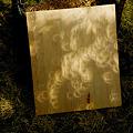 20120521 金環日食 (05) 木漏れ日もリングに