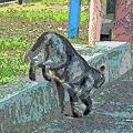 Photos: 野良猫の散歩