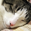 Photos: 寝顔