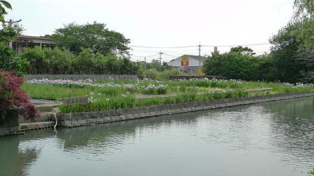 柳川~椛島菖蒲園(1)