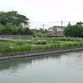 Photos: 柳川~椛島菖蒲園(1)