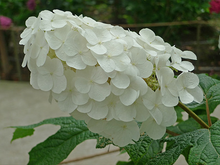 筥崎宮~紫陽花園(6)
