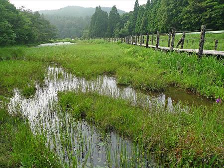 樫原湿原(11)