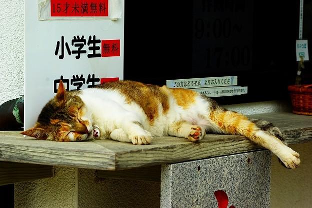 満福寺看板猫