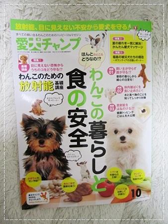 20110905 愛犬チャンプ