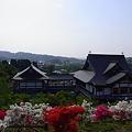 Photos: ツツジ 倶利伽羅不動尊 鳳凰殿