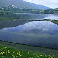 青木湖と水田 背景に残雪のアルプス?