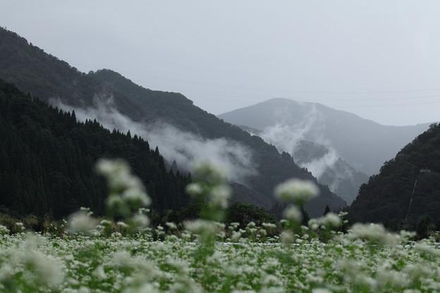 ソバ畑と山並み 霧