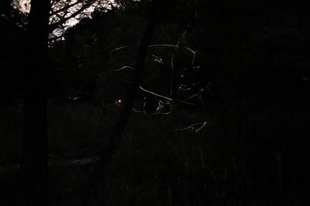 ホタル観賞2010 in月夜野_20100704-202031