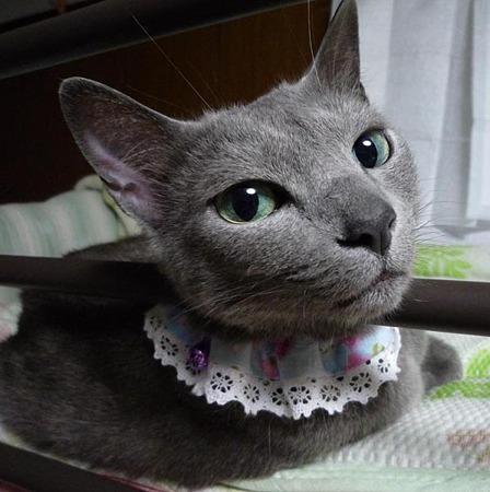 キラキラ瞳。